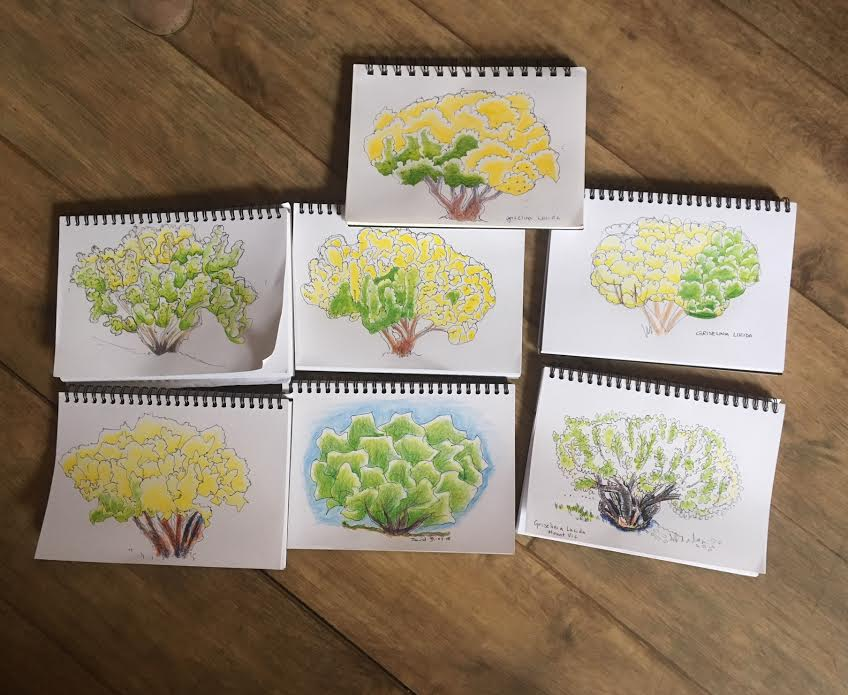 New Sketchers Class Tuesday 31st July 2018